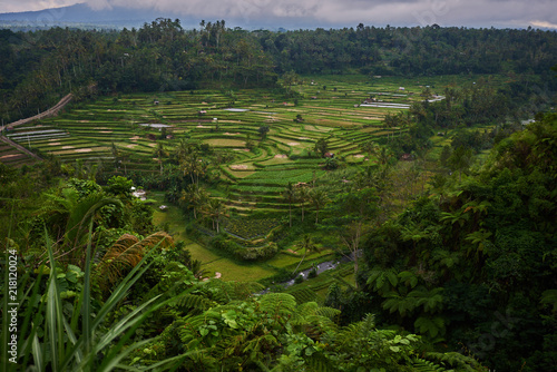 Fotobehang Rijstvelden Landscape, terraced rice field surrounded by tropical forest. Plantation, farm. An organic asian farm and agriculture. Lush green fields of the countryside. Nature and landscape.