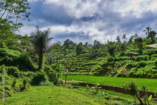 Tuinposter Wijngaard Green rice fields on terraced. Green Asian oasis with trees and bushes, rows for farming. Rural landscape. Green grass, blue sky and cloudy landscape background. Rice farming on mountains.