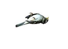 Isolated Dead Bird