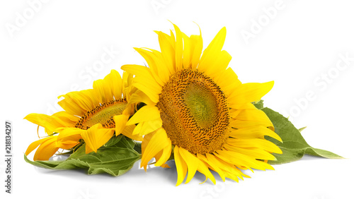 In de dag Zonnebloem Beautiful sunflowers with leaves on white background