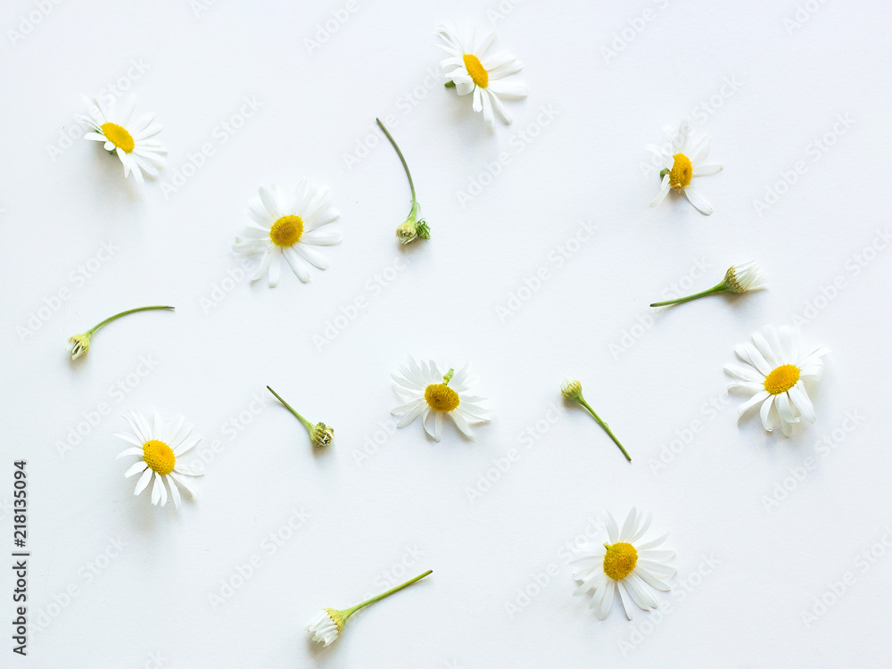 Fototapety, obrazy: Chamomile flowers Top view Many flowers and buds of chamomile are lying on a white table Photo template in pastel colors