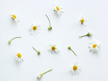 Chamomile Flowers Top View Man...