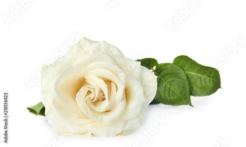Beautiful fresh rose on white background. Funeral symbol