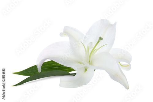 Beautiful lily on white background. Funeral flower