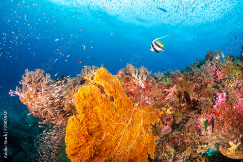 Tuinposter Koraalriffen A beautiful, colorful tropical coral reef system