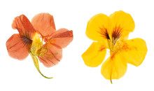 Pressed And Dried Flowers Nast...