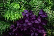 Fern And Purple Flowers 2