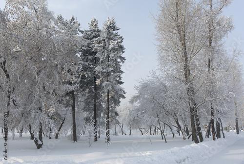 snieg-pokryte-jodly-zimowy-mroz-zimny-grudzien-moning-w-parku