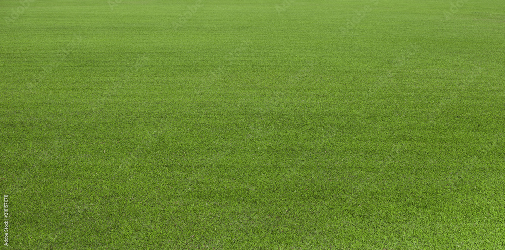 Fototapeta Green grass field, green lawn. Green grass for golf course, soccer, football, sport. Green turf grass texture and background for design with copy space for text or image.