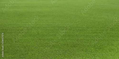 Poster Gras Green grass field, green lawn. Green grass for golf course, soccer, football, sport. Green turf grass texture and background for design with copy space for text or image.