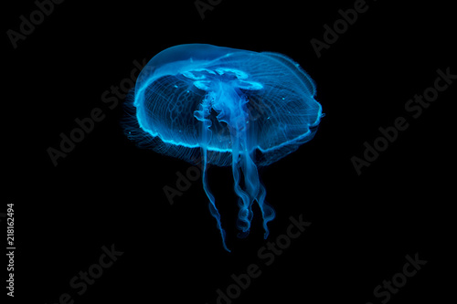 Jellyfish floating in a water
