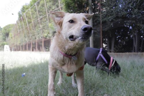 Cuadros en Lienzo dogs perros doggie dulce sweet nala lucas