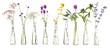 Leinwandbild Motiv plants in test tube