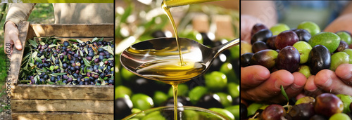 Fotoposter Olijfboom composition of Italian oil and olives, concept of bio food and genuine food. Italian olive groves and tradition and passion for ancient work.