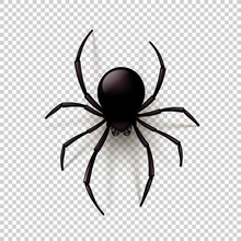 Black Spider With Transparent Shadow On A Checkered Background. Can Be Placed On Any Background. Vector Illustration,