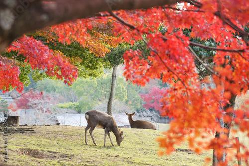 奈良の紅葉 Billede på lærred
