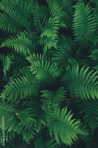 Fern Leaves From Above - 218189427