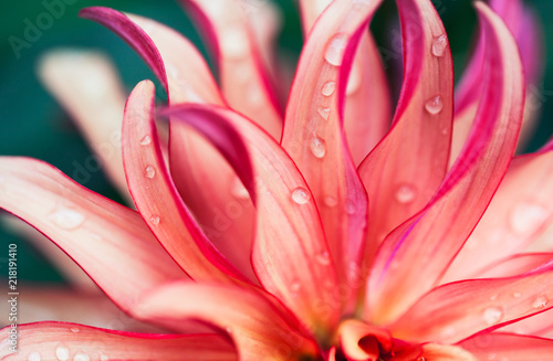 Photo sur Aluminium Macro photographie Pink Flower Macro