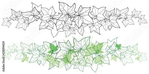 Vector horizontal border of outline bunch Ivy or Hedera vine Wallpaper Mural