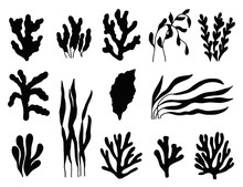 Seaweed Silhouette Isolated. M...