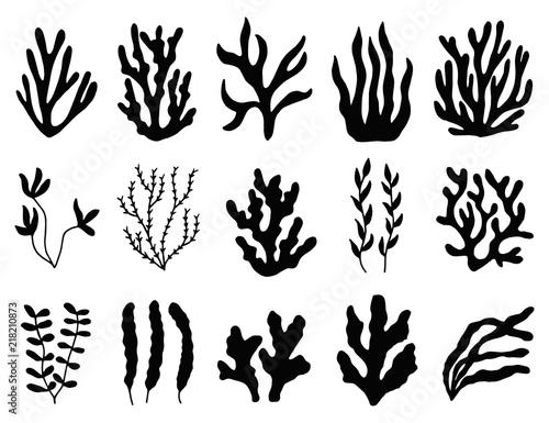 Obraz na plátně seaweed silhouette isolated. Marine plants on white background.