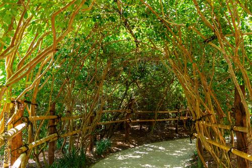 Obraz na plátně Garden arbor of overarching branches covering pathway - Florida, USA