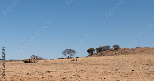Fotobehang Zalm Safari landscape