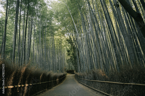 Foto op Plexiglas Bamboe Bamboo forest walkway with film vintage style