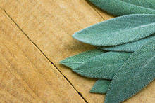 Leaves Of Freshly Picked Sage ...