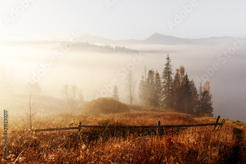 Foto op Canvas Herfst Amazing scene on autumn mountains. Yellow and orange trees in fantastic morning sunlight. Carpathians, Europe. Landscape photography