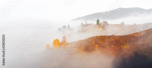 Obraz Amazing scene on autumn mountains. Yellow and orange trees in fantastic morning sunlight. Carpathians, Europe. Landscape photography - fototapety do salonu