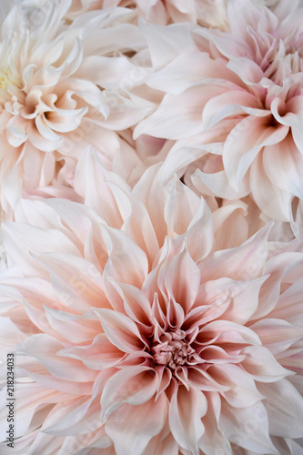 Canvas-taulu Dahlia - Cafe au Lait
