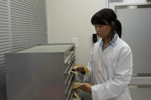 Laboratory Technician Placing Plasma Bags In Cabinet