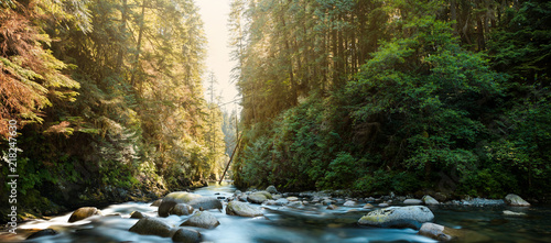 Printed kitchen splashbacks Forest river The river at Lynn Canyon in North Vancouver.