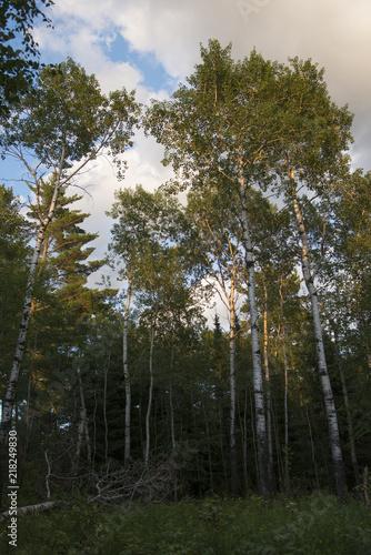 Fototapeta lake12086.jpg obraz na płótnie