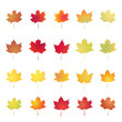 Set of colored maple leaves. Vector objects