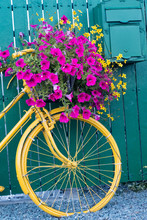Vintage Decorative Yellow Bicycle With Flower Basket Up Against Green Wooden Fence