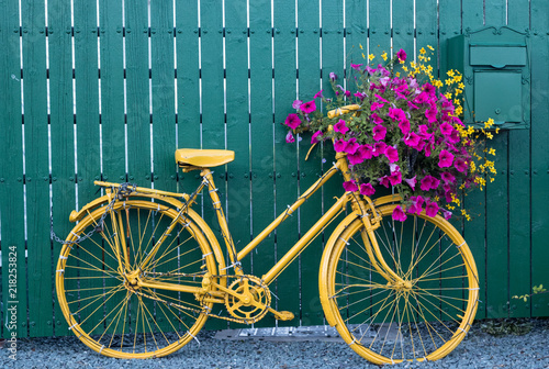 Foto op Plexiglas Fiets Close up on vintage decorative yellow bicycle with flower basket up against green wooden fence
