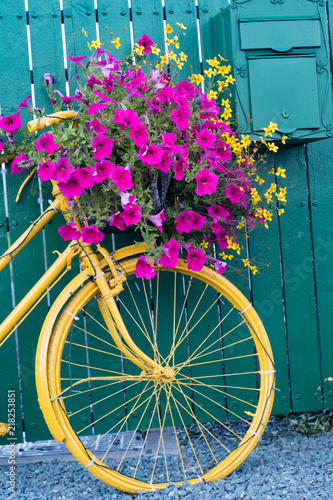 Foto op Plexiglas Fiets vintage decorative yellow bicycle with flower basket up against green wooden fence