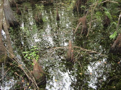 Fotografie, Obraz  Swamp at Six Mile Cypress slough
