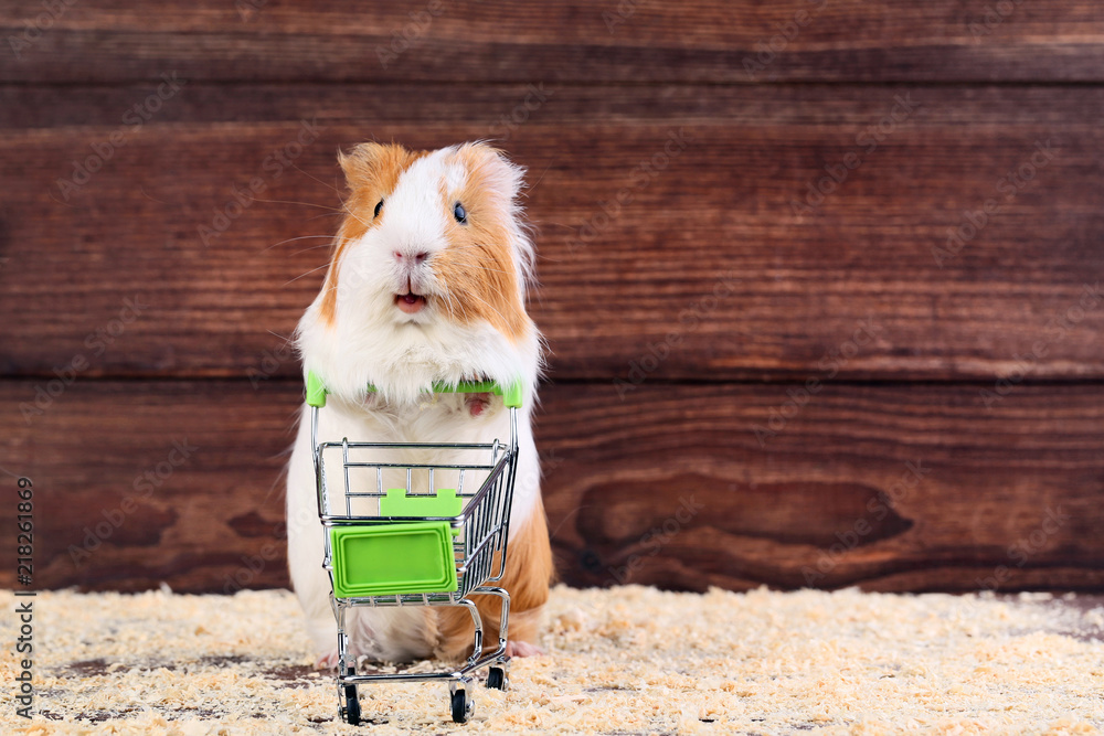 Guinea pig with shopping cart on brown background