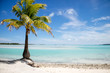 Single palm tree, lagoon and island
