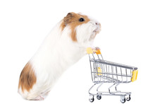 Guinea Pig With Shopping Cart ...