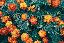 Beautiful Floral Background. Texture Of Garden Flowers