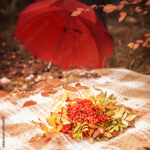 In de dag Herfst Autumn scene plaid with bunches of rowan berries with leaves bouquet on yellow grass and red umbrella