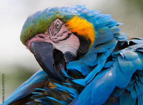 In de dag Papegaai Macaw head portrait