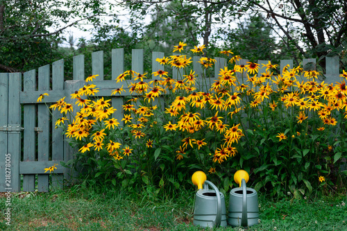 Canvas-taulu Watering pots near the flowerbed of yellow rudbeckia in the garden