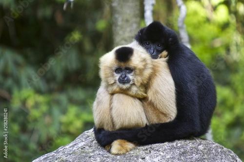 Valokuvatapetti Affen umarmt