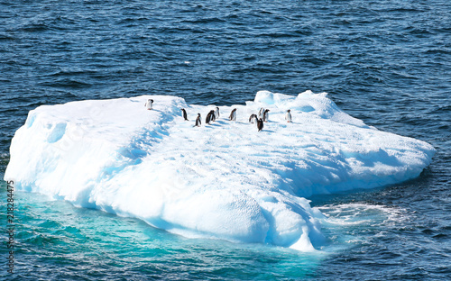 Tuinposter Antarctica A group of Penguins Resting on Iceberg, Antarctic Ocean, South Pole