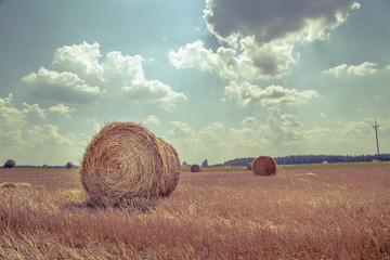 FototapetaVintage Harvest, bale, hay in the field
